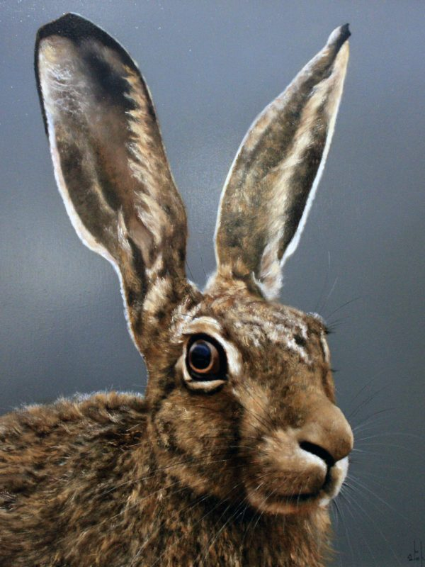Harry the Hare by Stephen Park