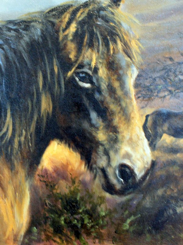 Lovely Exmoor Ponies by Mick Causton