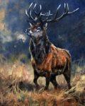Monarch of the Glen by John Trickett