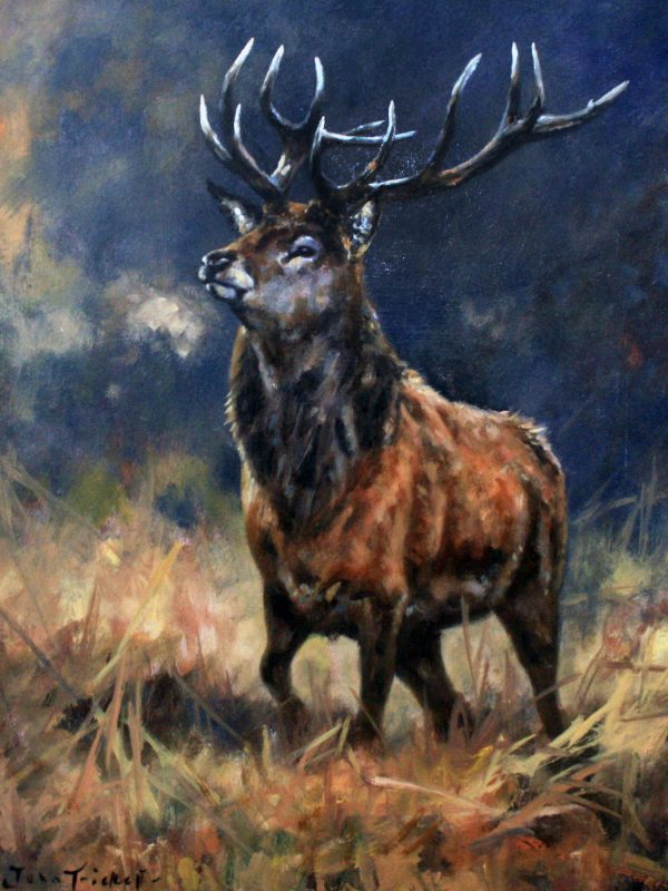 Monarch of the Glen by John Trickett