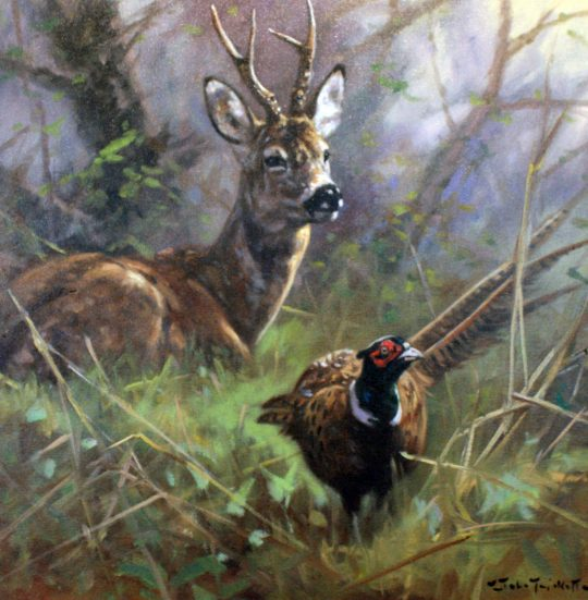 Roe and Pheasant by John Trickett