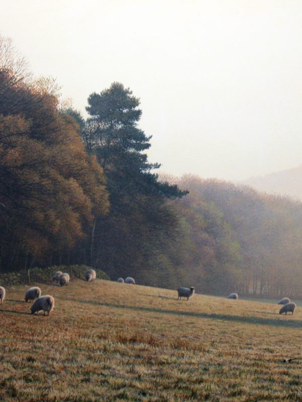 Autumn Grazing by Paul James