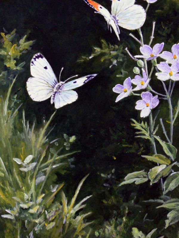 Butterflies by Martin Rumary