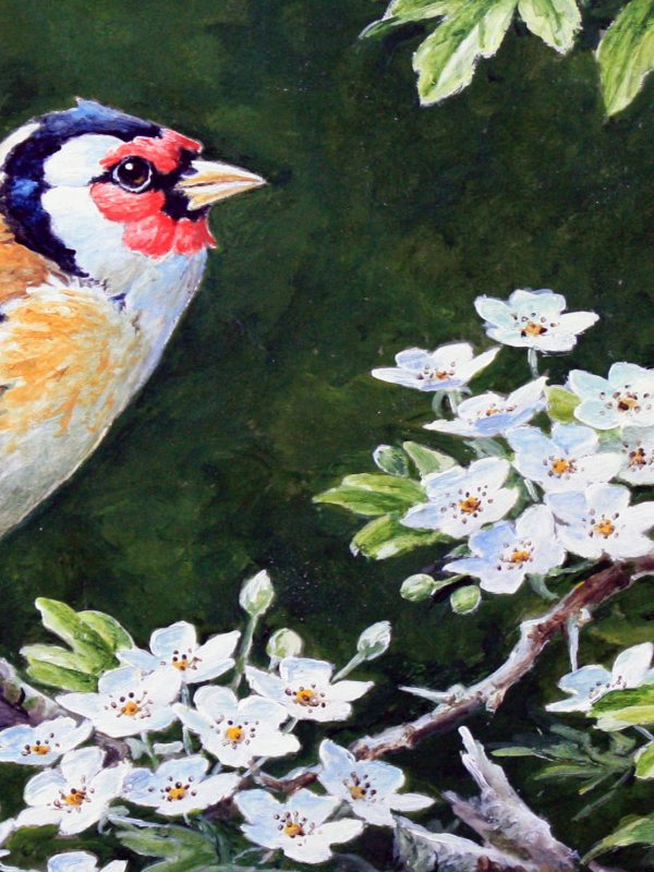 Goldfinch by Martin Rumary