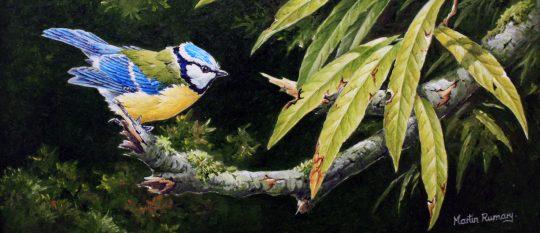 Redstart on Hazel by Martin Rumary