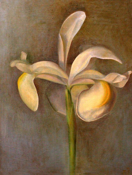 Iris by Julia Sorrell