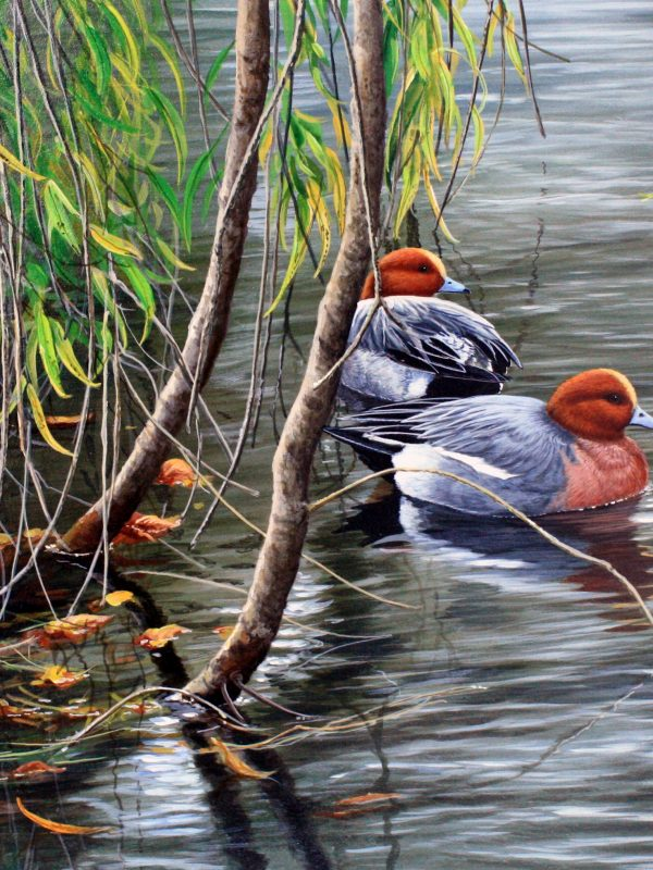 Willow and Wigeon by Jeremy Paul