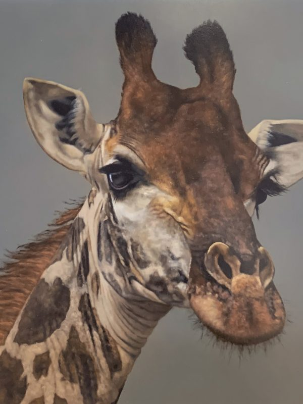 Geoffrey the giraffe by Stephen Park 2